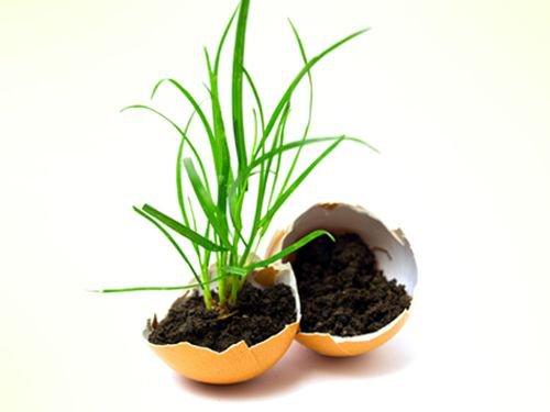 11 usos insólitos del huevo